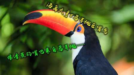 武仙解说 海岛大亨5 马耳他巨嘴鸟 大拉戈岛 会战第三关