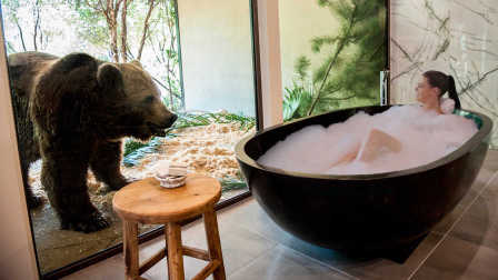 老虎在你床边打呼,狗熊看着你洗澡,这样的酒店你敢睡吗?