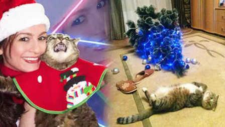 开撕!宠物们毁掉了圣诞节!