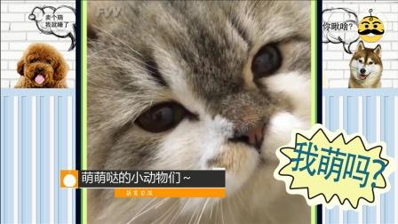 为什么这么厉害的猫都是别人家的?好像要啊!