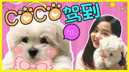 0186  小伶的新家庭成员:爱犬小狗