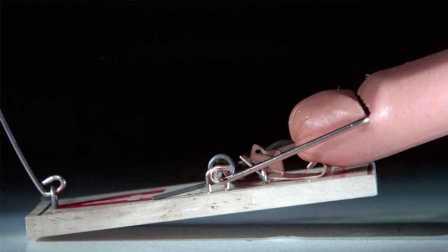 【科技微讯】老鼠夹,遇上火腿肠!高清慢动作,看着很满足