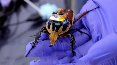 【科技微讯】机械甲虫:被电子科学操控!太科幻
