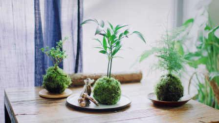 《造物集》不用花盆也能养盆栽