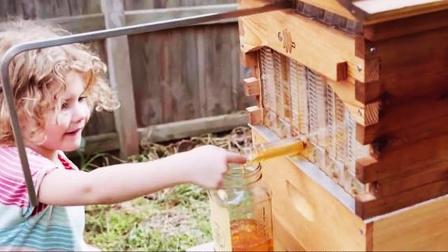 蜂箱小改变,按上水龙头直接喝,买回家卖蜂蜜去