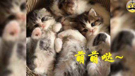 这些猫咪萌得让人想犯罪