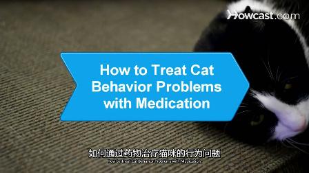 如何通过药物治疗猫咪的行为问题_视频听译_运城翻译_特兰斯科