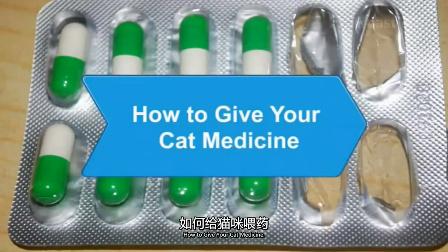 如何给猫咪喂药_宠物护理_视频听译_运城翻译_特兰斯科