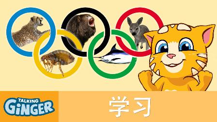 会说话的金杰猫:11 动物奥运会&宫殿城堡游记