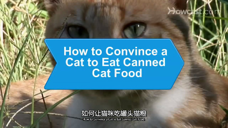 如何让猫咪吃罐装猫粮_视频听译_运城翻译_特兰斯科