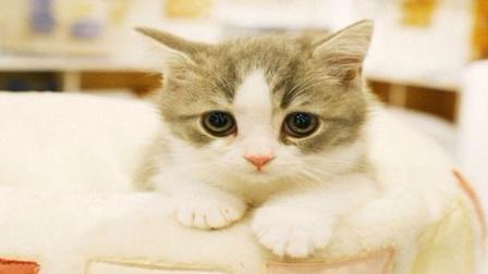 萌宠日报 2017:这猫咪这声音这动作 萌了我一脸呐 17