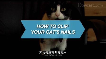 如何给猫剪指甲_宠物护理_视频听译_特兰斯科