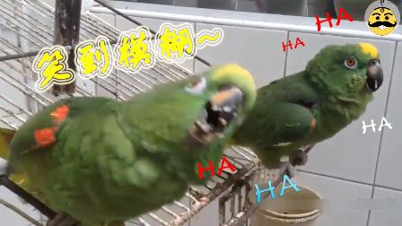 两只笑声超魔性的鹦鹉,简直要笑炸了!