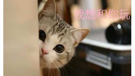 萌宠日报 2017:猫咪霸占位置不让你工作怎么办 教你一招瞬间解决 22