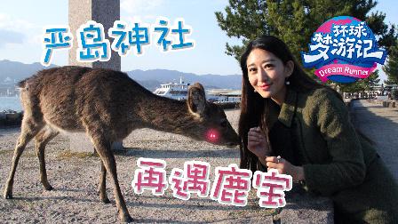 严岛神社再遇鹿宝
