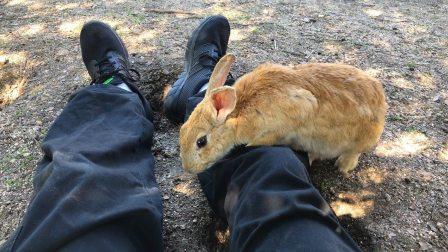 日本兔子岛!想像你在一个有数千只兔子的岛上
