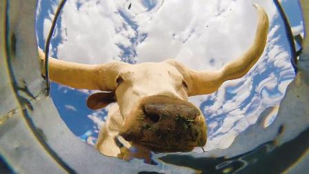 独特的视角~把gopro放水桶中,看动物们如何喝水