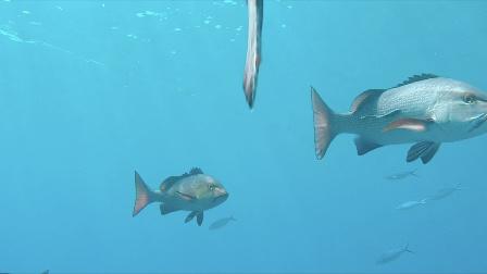 当姑娘遇见大堡礁,要美丽也要环保!