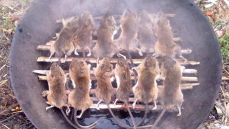 第51集:老鼠的99种吃法