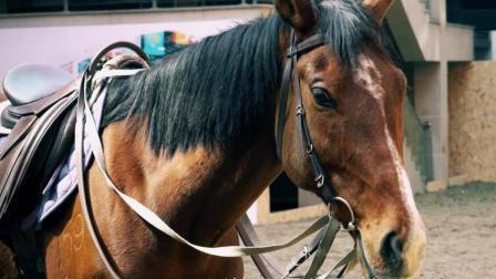 高富帅和low逼之间就差在这里了, 如何优雅的骑马你会么?