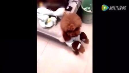 狗狗被主人批评太脏, 竟自己跑去卫生间要洗澡