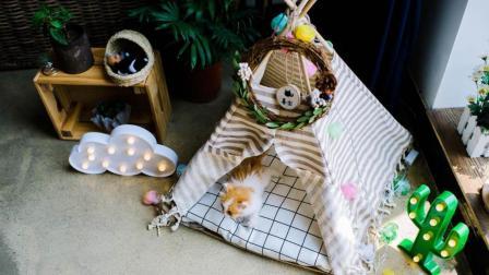 亲手给家里的猫咪做个窝