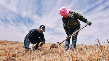 他在沙漠里,15年默默种下了500多万棵树