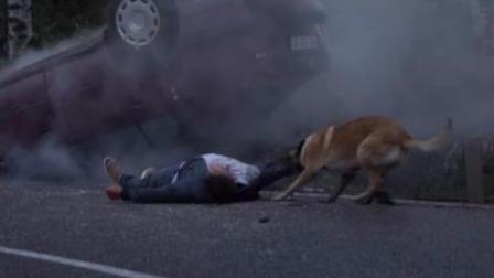 狗狗忠心守候昏迷的主人, 知道他发生车祸的「背后真相」后, 感动的哭了