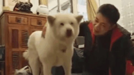 主人为狗狗找到14年前的前主人相间场面却令人意外