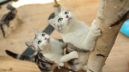 猫住得比人好!北京猫奴开了家五星级猫酒店!
