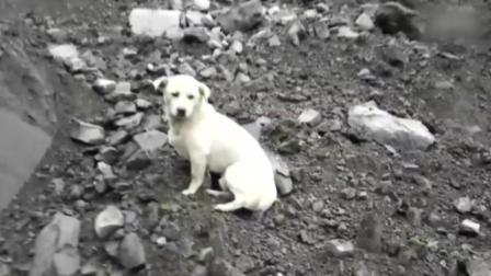 茂县山体垮塌 逃过一劫的狗狗废墟中来回寻找主人