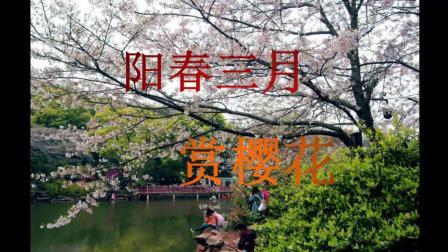 省植物园赏樱花