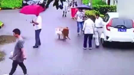 监拍8旬大爷出门买菜 遭大型犬冲撞倒地致盖塌陷性骨折