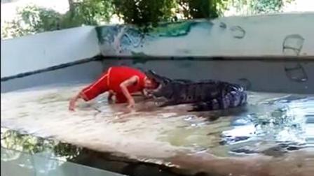 泰国鳄鱼表演师遭撕咬 游客拍下惊险一幕
