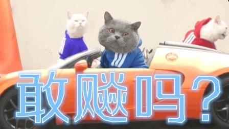 速度与激情——猫咪版