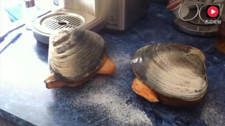实拍: 喂野生大贝壳 吃家用精制绿色碘盐 补充营养