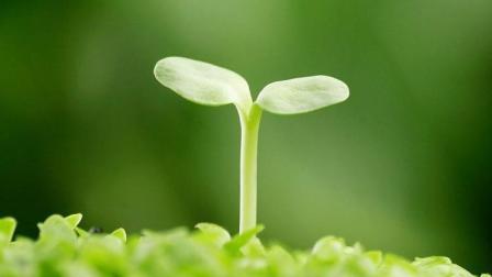 五谷杂粮, 人体生命所需要的必要物质, 传统中医告诉你元气足一分, 生命长一分!