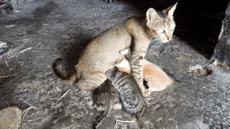 #冬日吸猫#【猫咪趣事】刚出生没多久超萌的小猫