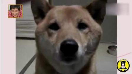日本综艺中, 狗狗与女优之间的谈话, 狗狗好聪明