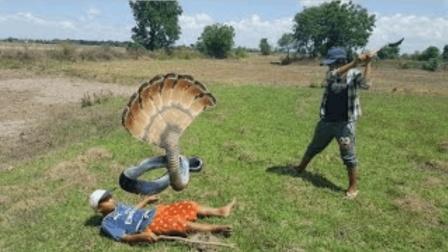 农村两兄弟发现草根下有异常, 挖出恐怖生物, 两下就给捉了
