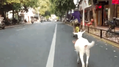 """女子骑单车带小羊溜街 网友:这是在""""抖音""""吗"""