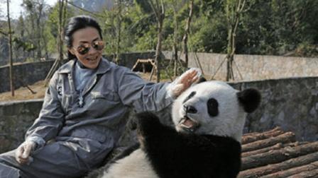 大熊猫与美女合影, 多次移动自拍杆, 自己找角度