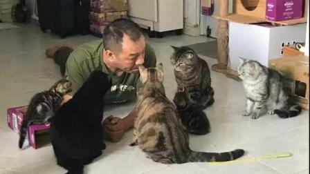 爸爸自从养猫后, 每天都要这样跟它们一起开会