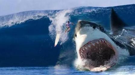 巨齿鲨: 一口能把鲸鱼咬成两半 杰森斯坦森能否杀死这头巨齿鲨