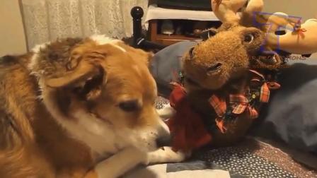国外点击很高的搞笑动物视频系列二