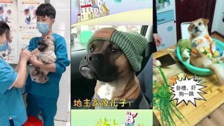 抖音热门搞笑合集(第28期)日常坑狗系列
