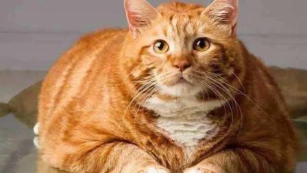 原来并不是所有猫都是液体的…哈哈哈看到这实在忍不住笑了