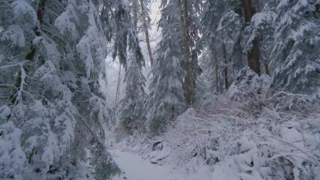 自然的魅力第九期,穿梭在冬季的大兴安岭丛林