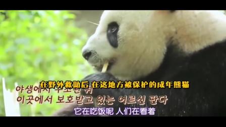 """中国熊猫的魅力,让韩国女明星全程""""惊艳""""的"""