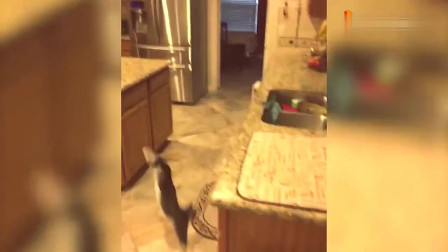 精选有趣的宠物悲剧搞笑视频集锦, 好蠢萌的动物